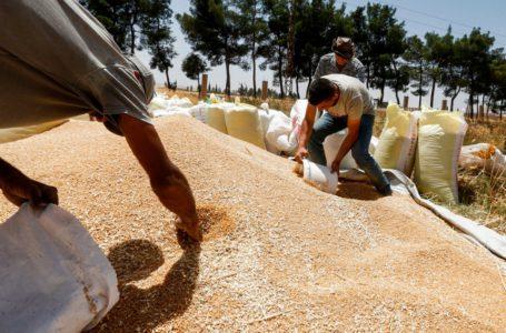 سوريا تشدد القيود على الواردات لتوفير الدولارات الشحيحة لشراء القمح