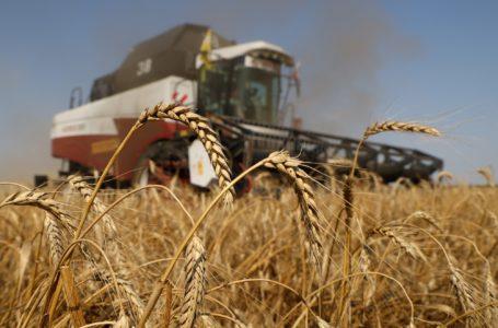 ارتفاع تكاليف الغذاء العالمية بالقرب من أعلى مستوياتها في عقد بسبب مشاكل الحصاد